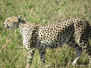 quenia 2013 (1)